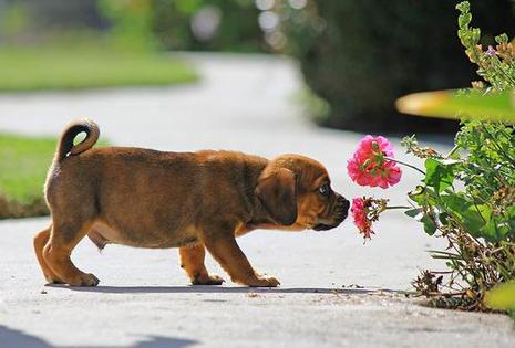 dog-sniffing-flowers2