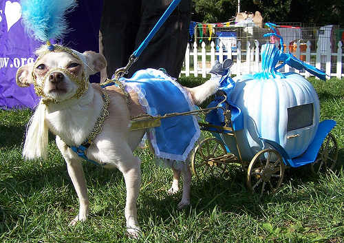dog and cinderella carriage