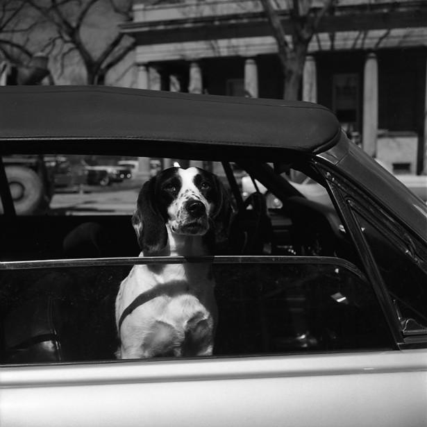 Vivian Maier dog