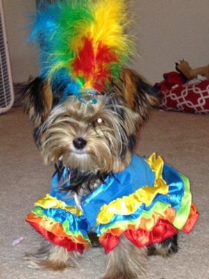 casual-canine-polly-parrot-dog-costume-7889