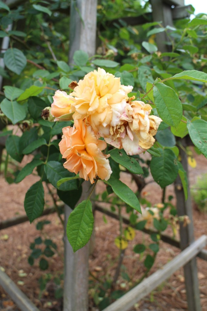 Miriam Ethridge's Garden