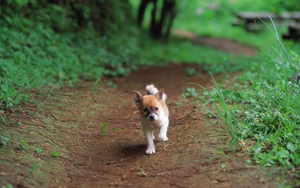 Pretty-Dog-in-Garden-puppies-13904320-1920-1200