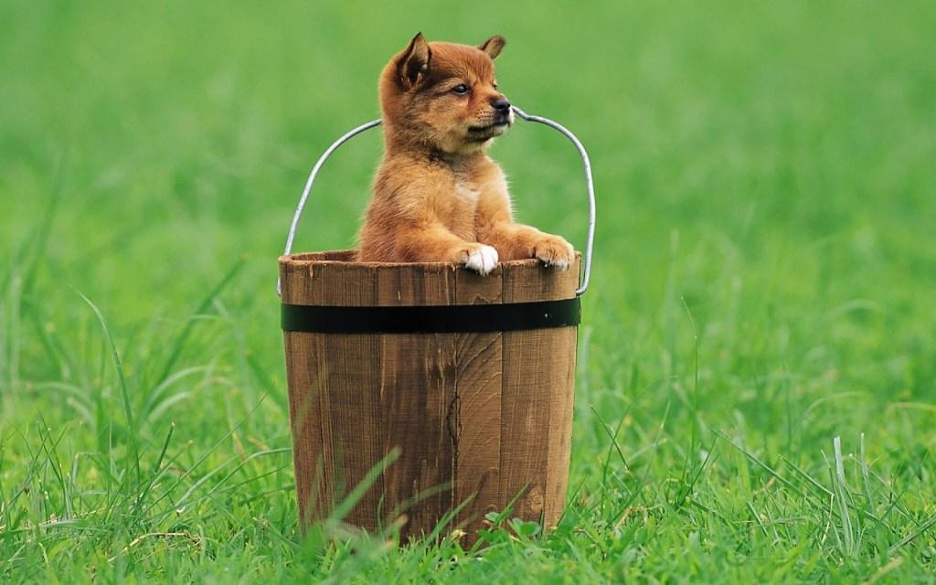 bucket dog
