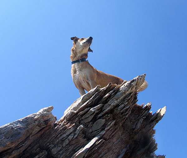 dog-on-cliff-179262-1