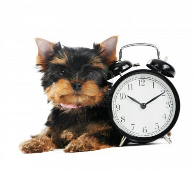 dog with clock