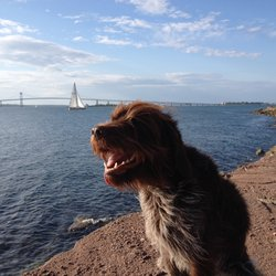 newport dog