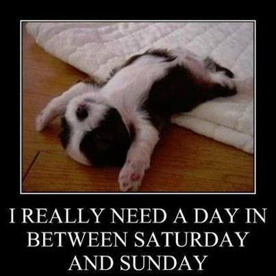 puppy Sunday