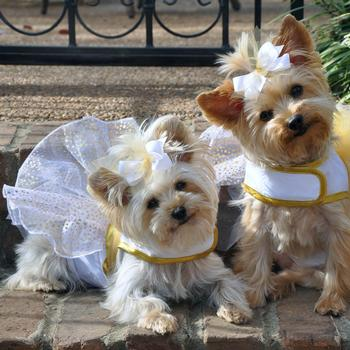 white-fairy-dog-costume-harness-dress-wings-2