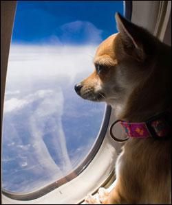 NSAR-Dog-Airplane