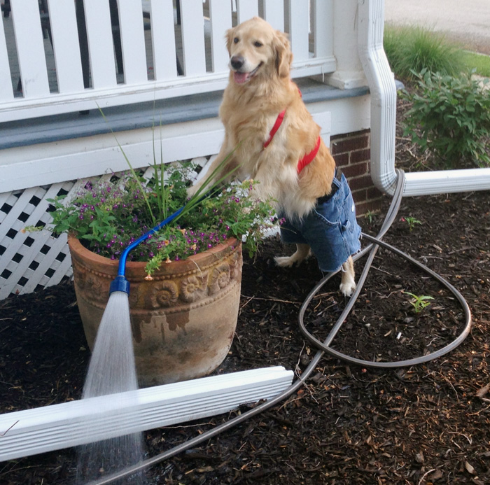 No-Idea-What-Im-Doing-Dog-Gardening