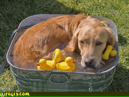 dog in cooler