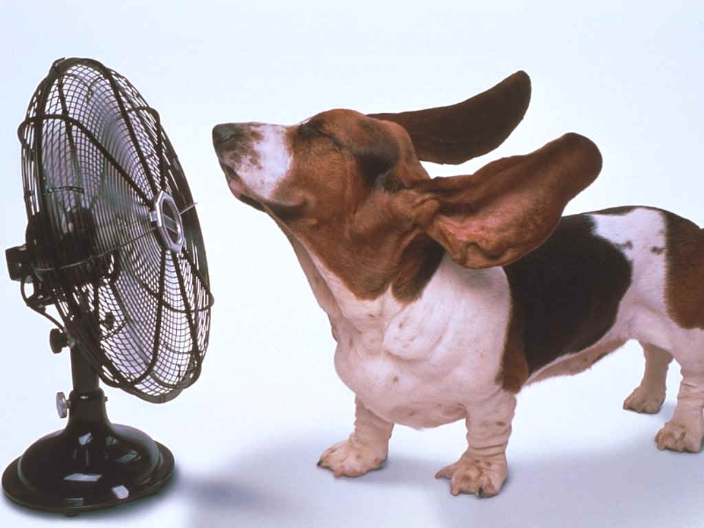 this_dog_has_a_fan1