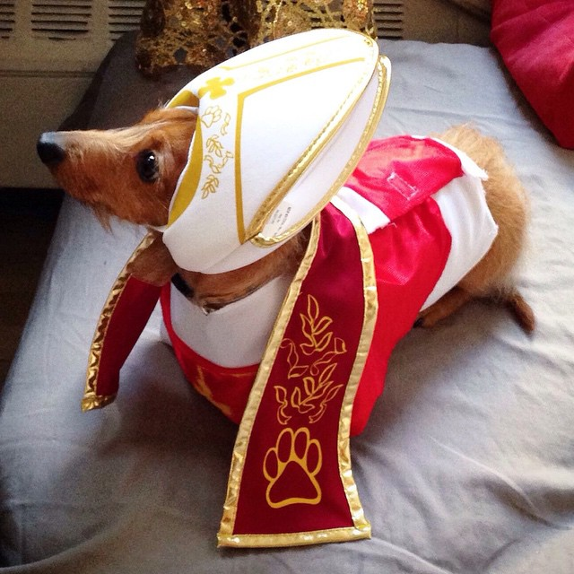 @pumpernickleplus pope dog