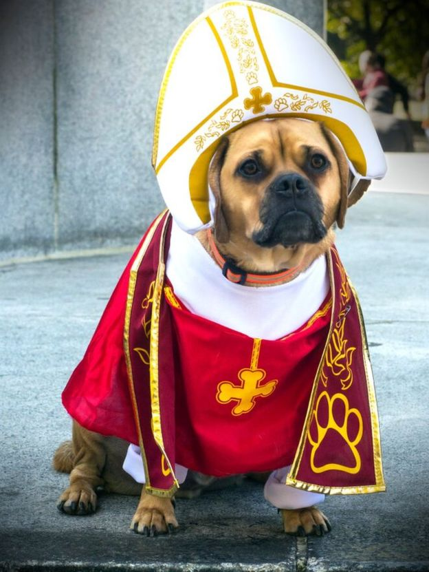 Stephen Dost image cr, pope dog