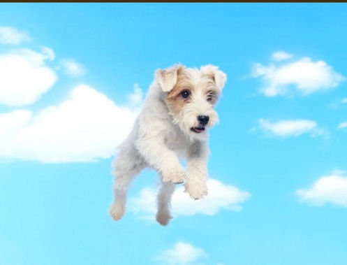 dog flying in clouds