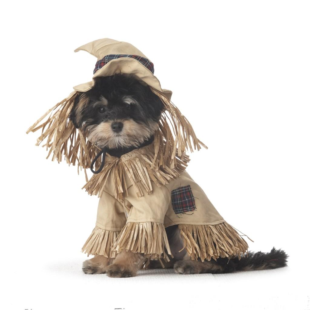 Scarecrow dog