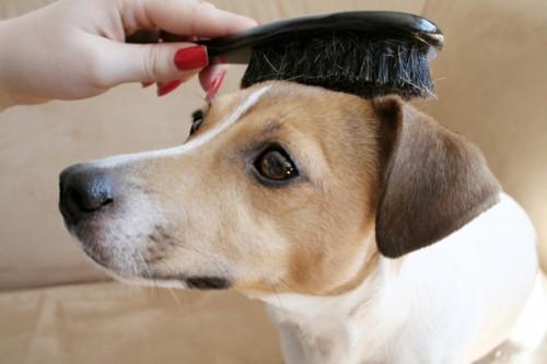 dog_hair_brushing