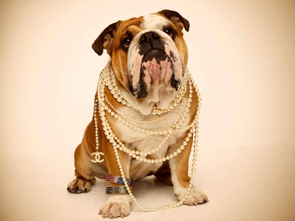 dog in necklace1