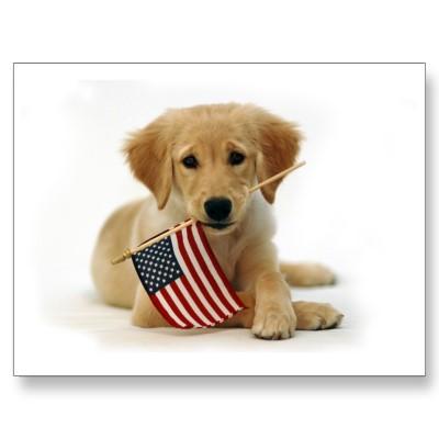 flag-dog