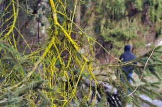 branch-green-moss