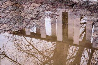 reflection: tree