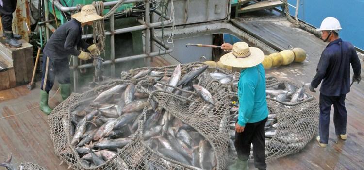 Battle for Pacific tuna