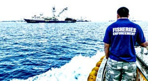 Monitoring of purse seine fishing operations in PNA waters is a critical element of ensuring sustainable fishing in the region, said PNA CEO Ludwig Kumoru. Pictured: a Marshall Islands Marine Resources Authority Fisheries Officer heads out to monitor tuna transshipment operations in Majuro lagoon. Photo: Francisco Blaha.