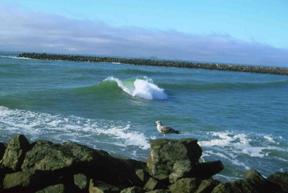 beach-and-gull.jpg