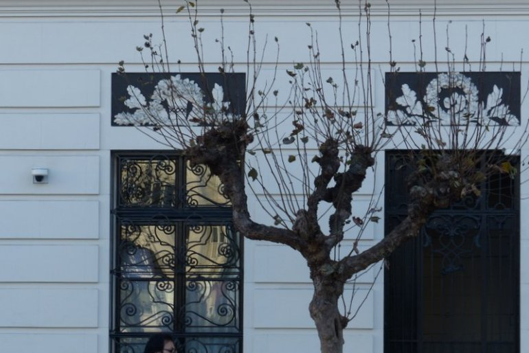 interplay of tree with wrought iron window grates