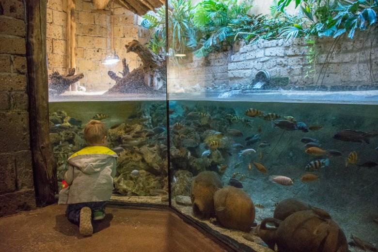 foto-10-aquarium_dsc5858