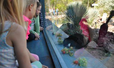 dagje burgers zoo