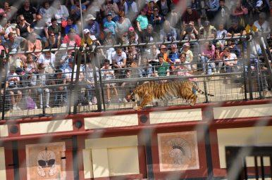 tijger signe du triomphe