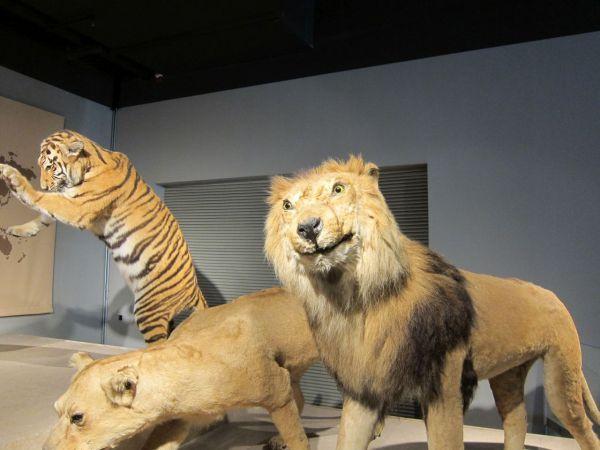 Shanghai Natural History Museum Marta Lives In China