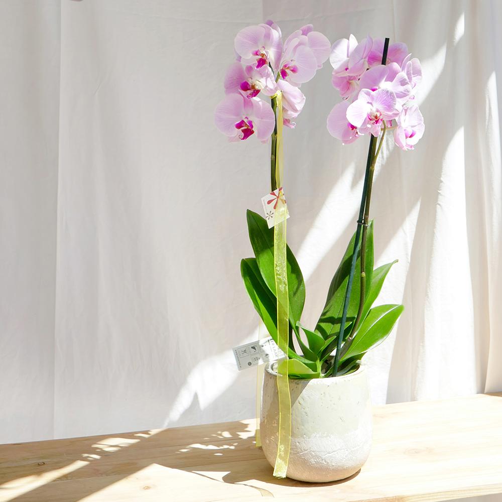 orquidea dos branques