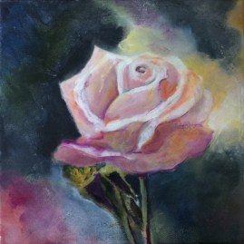 40 Still life with pale pink rose, Hagley Park, Christchurch