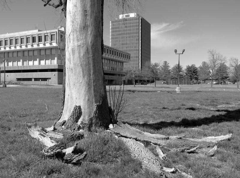 Ein Baum, dessen Rinde sich abschält und abfällt - im Hintergrund eine Straßenlaterne, ein Parkplatz sowie Bürogebäude
