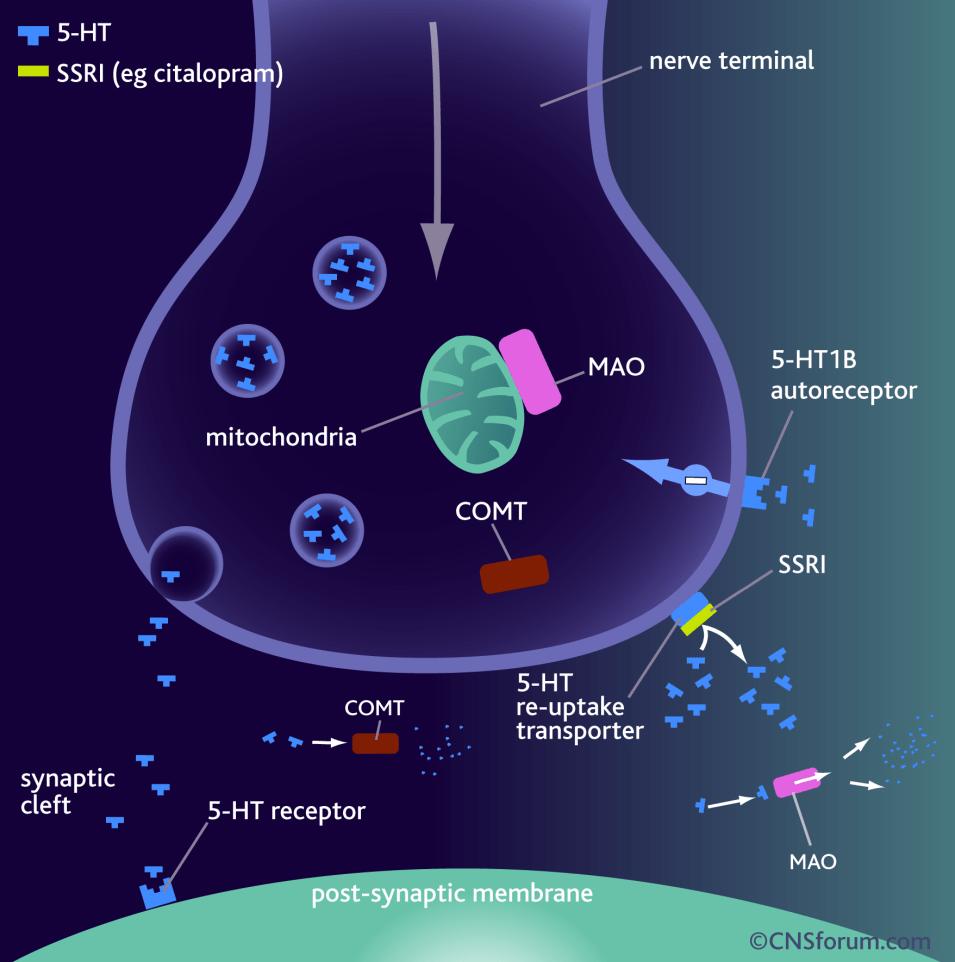 Drug_SSRI_2