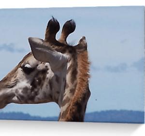 Giraffe's head, Kenya