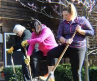 Avila diggers