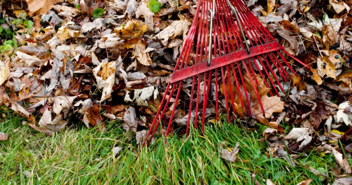 Leaf and Brush Pick Up Nov. 28-Dec. 2
