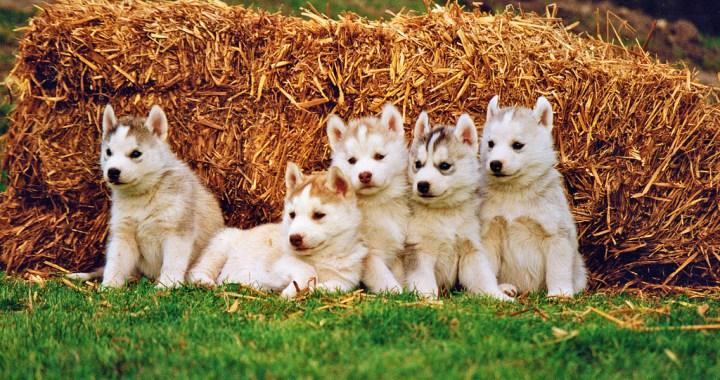Premier Mazda Hosts Puppy Adoption