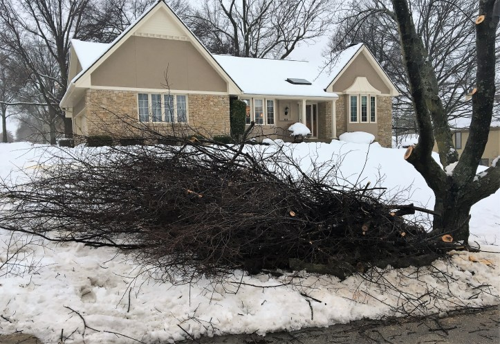 Broken limbs must be cut to a length of six feet and placed by the curb by 6 a.m. January 28.