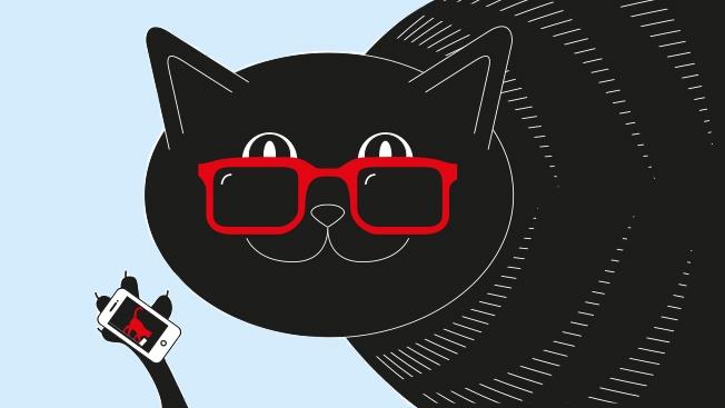 cool cat graphic