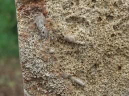 micro detail, Three Faces Standing Stone, Winterset Limestone, by Martin Cooney, Birdhaven Sculpture Garden, Woody Creek, Colorado