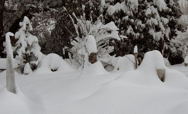 Snowgoyles brave The Deep Winter Snowscape Garden Video Photo Tour 2014 02 04