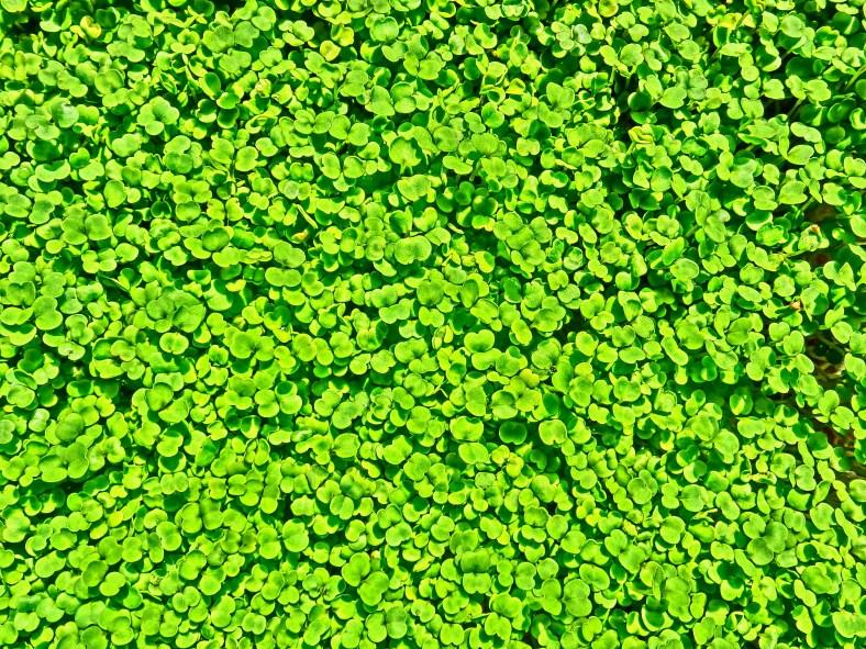Emerald Greens, Woody Creek CO