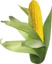sans maïs, il n'y aurait pas de boules de pop-corn