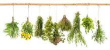 Herbes de Provence pour Aïgo boulido
