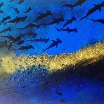 Migration de requins marteaux 70x50