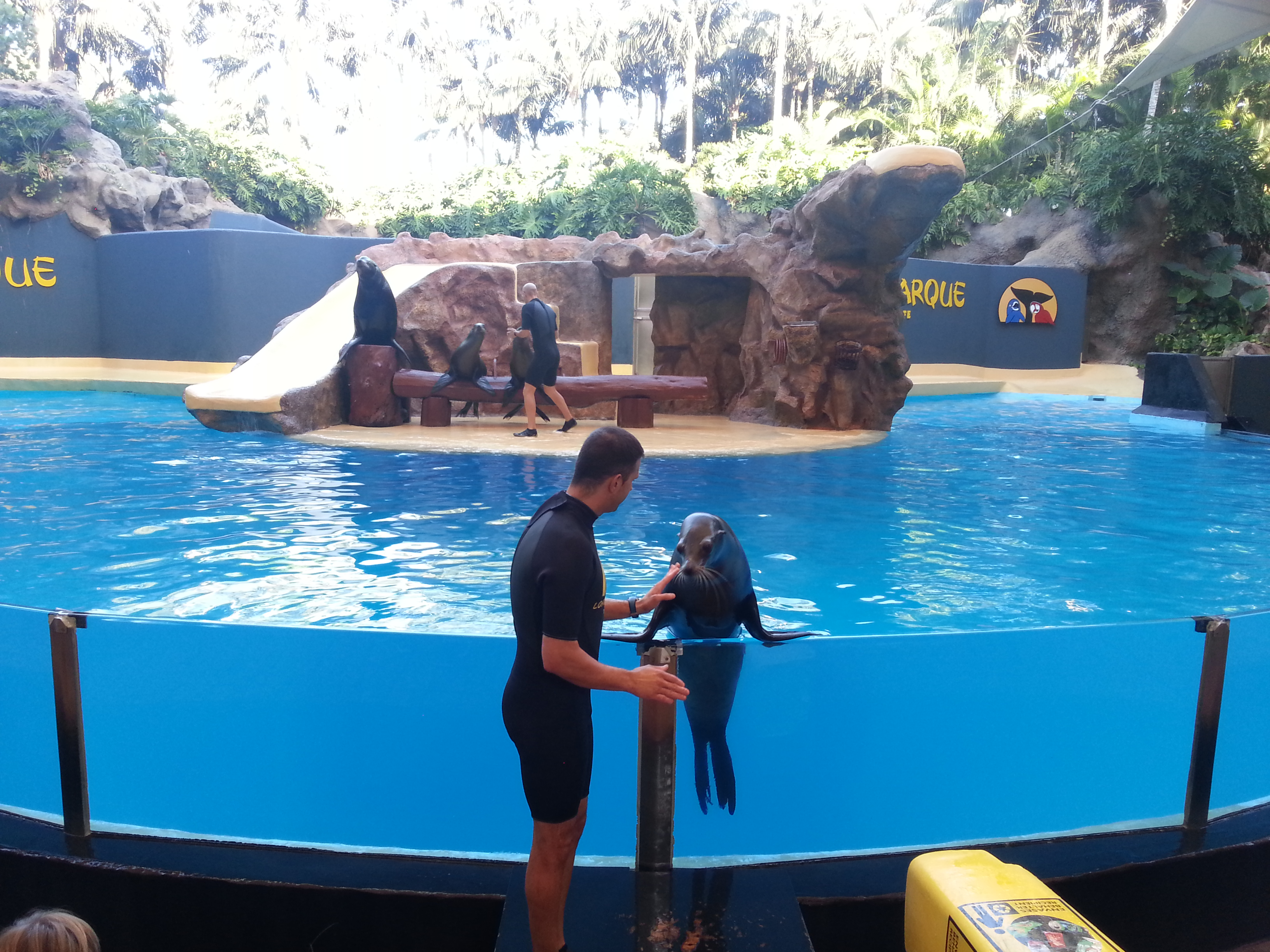 Loro Parque - show with seals